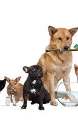 l'assurance pour votre animal domestique